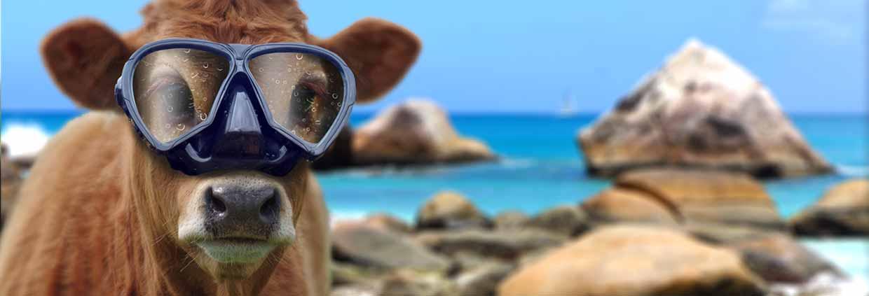 Les animaux en vacances