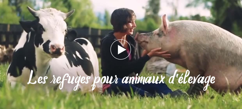 Les refuges pour animaux d'élevage