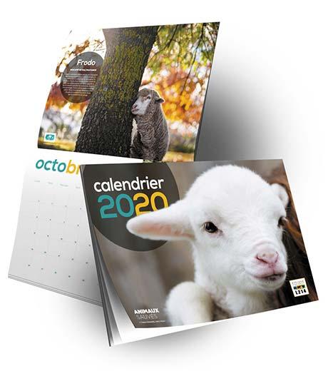 Le calendrier 2020 des animaux sauvés